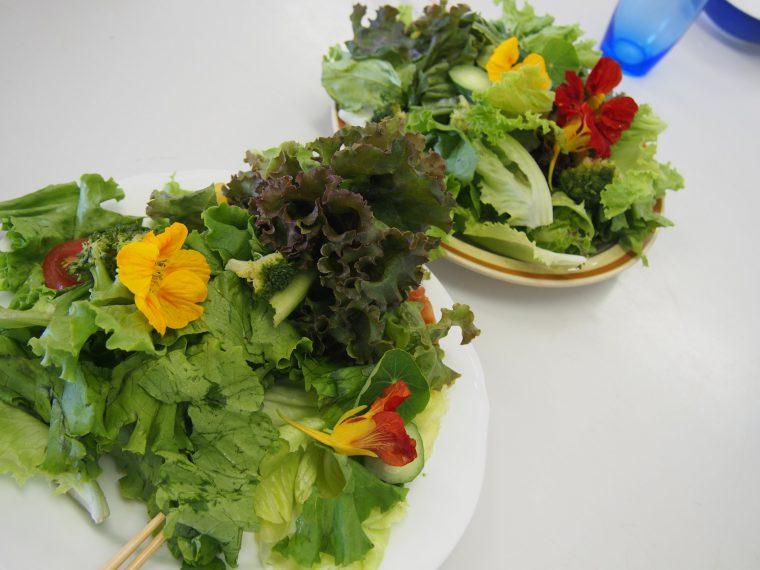 cake-salad