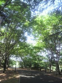 日常 ときどき スピリチュアル-府中の森