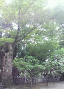 日常 ときどき スピリチュアル-布多神社